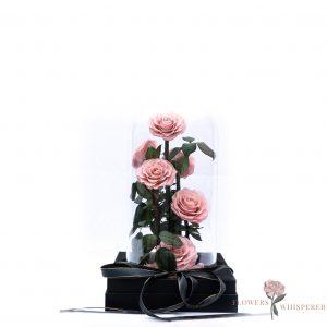 Everlasting Rose – Seven stems