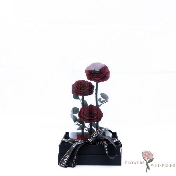 Everlasting Rose-Wine Red